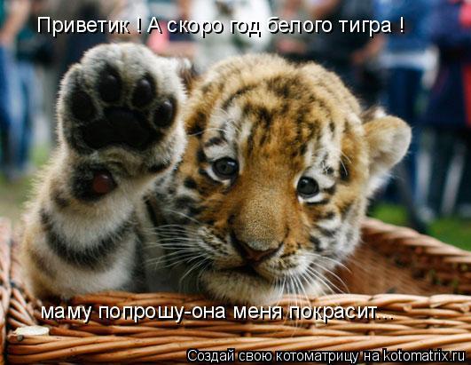 Котоматрица: Приветик ! А скоро год белого тигра !  маму попрошу-она меня покрасит...