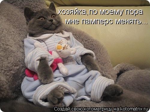 Котоматрица: хозяйка,по моему пора мне памперс менять...