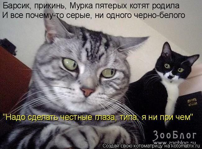 """Котоматрица: Барсик, прикинь, Мурка пятерых котят родила И все почему-то серые, ни одного черно-белого """"Надо сделать честные глаза, типа, я ни при чем"""""""