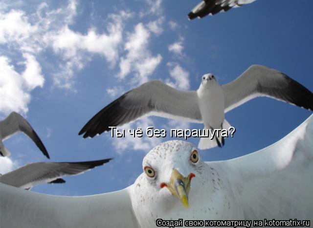 Котоматрица: Ты чё без парашута?