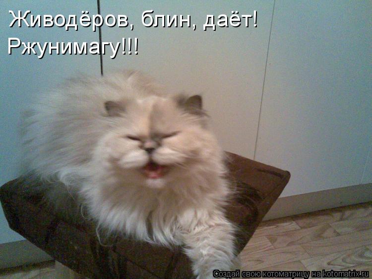 Котоматрица: Живодёров, блин, даёт!  Ржунимагу!!!