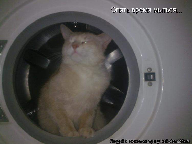 Котоматрица: Опять время мыться...