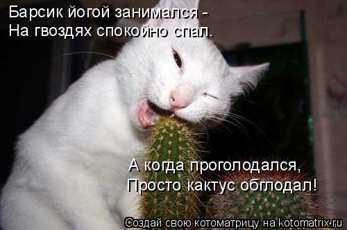 Котоматрица: Барсик йогой занимался -  На гвоздях спокойно спал. А когда проголодался, Просто кактус обглодал!