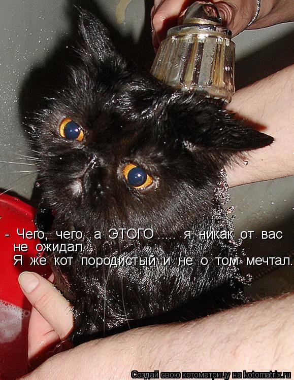 Котоматрица: -  Чего,  чего,  а  ЭТОГО .....  я  никак  от  вас  не  ожидал...  Я  же  кот  породистый  и  не  о  том  мечтал...