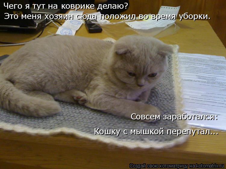 Котоматрица: Чего я тут на коврике делаю? Это меня хозяин сюда положил во время уборки.  Совсем заработался: Кошку с мышкой перепутал...