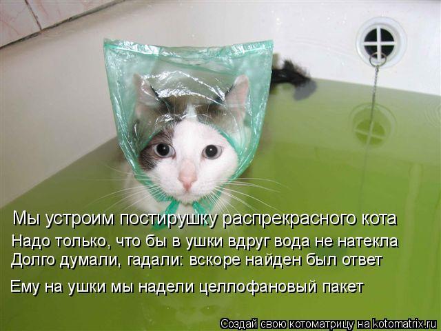 Котоматрица: Мы устроим постирушку распрекрасного кота Надо только, что бы в ушки вдруг вода не натекла Долго думали, гадали: вскоре найден был ответ Ему