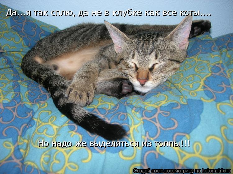 Котоматрица: Да...я так сплю, да не в клубке как все коты.... Но надо же выделяться из толпы!!!
