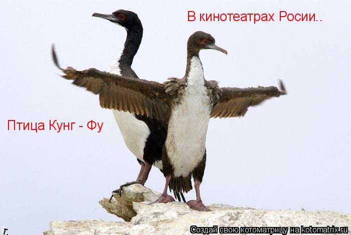 Котоматрица: Птица Кунг - Фу В кинотеатрах Росии..