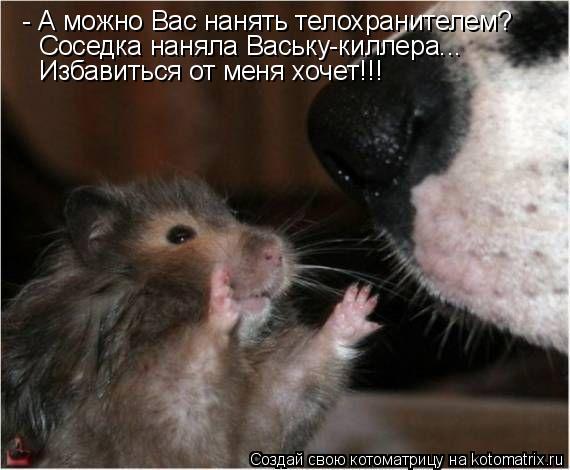 Котоматрица: - А можно Вас нанять телохранителем? Соседка наняла Ваську-киллера... Избавиться от меня хочет!!!
