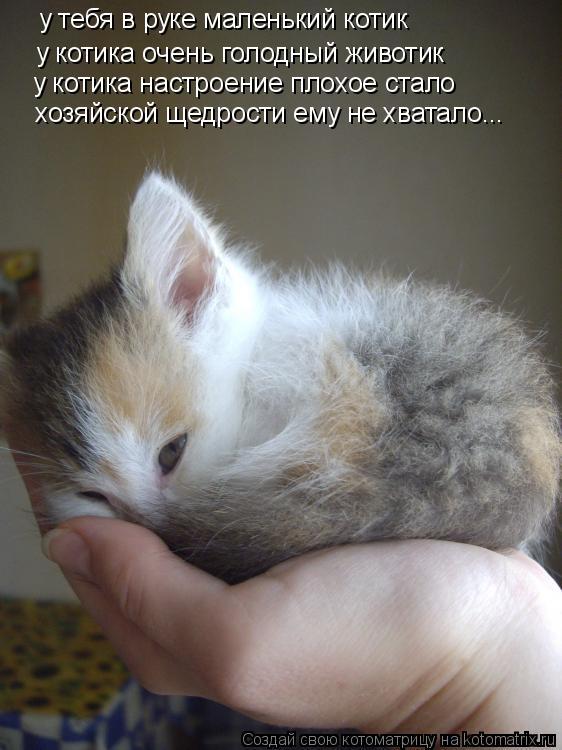 Котоматрица: у тебя в руке маленький котик у котика очень голодный животик у котика настроение плохое стало хозяйской щедрости ему не хватало...