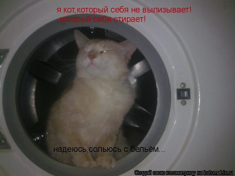 Котоматрица: я кот,который себя не вылизывает! который себя стирает! надеюсь,сольюсь с бельём...