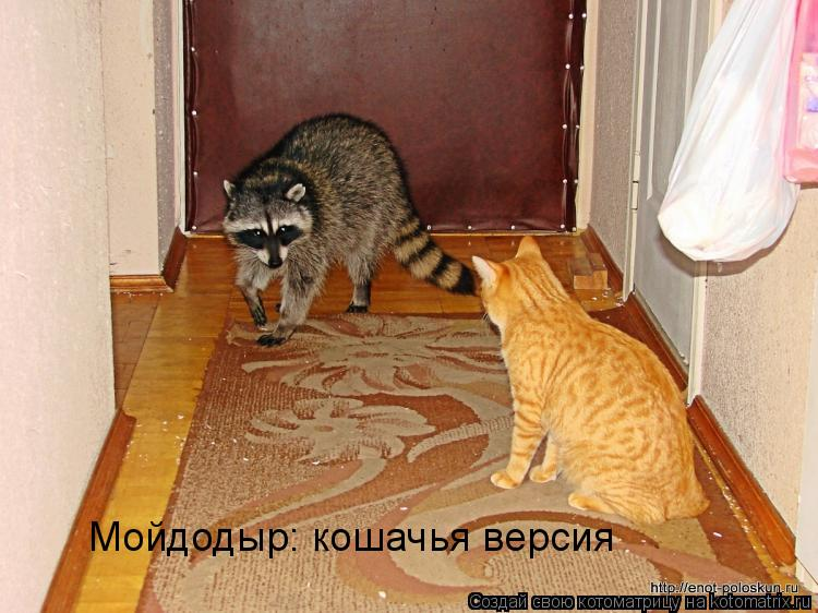 Котоматрица: Мойдодыр: кошачья версия