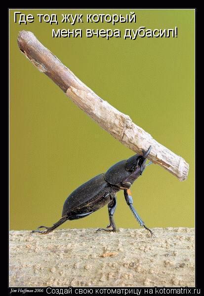 Котоматрица: Где тод жук который меня вчера дубасил!