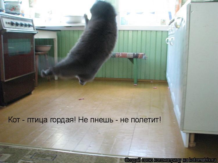Котоматрица: Кот - птица гордая! Не пнешь - не полетит!
