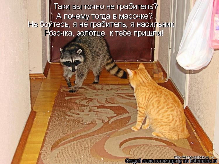 Котоматрица: Таки вы точно не грабитель?  А почему тогда в масочке? Не бойтесь, я не грабитель, я насильник Розочка, золотце, к тебе пришли!