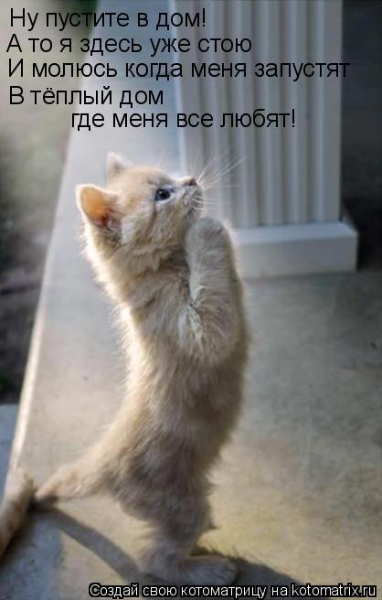 Котоматрица: Ну пустите в дом! А то я здесь уже стою И молюсь когда меня запустят В тёплый дом где меня все любят!