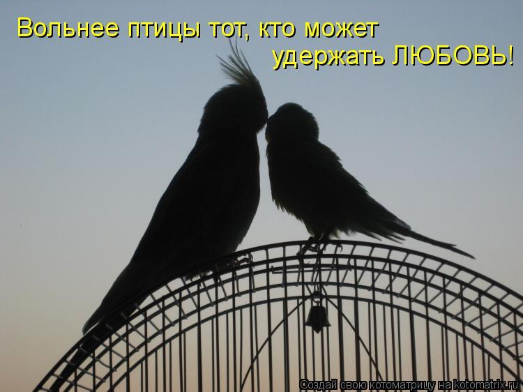 Котоматрица: Вольнее птицы тот, кто может удержать ЛЮБОВЬ!