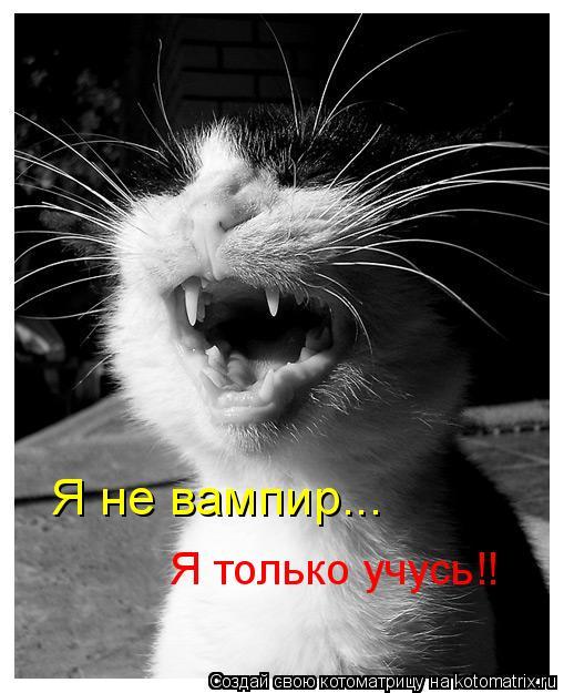 Котоматрица: Я не вампир... Я только учусь!!