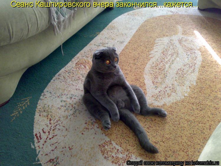 Котоматрица: Сеанс Кашпировского вчера закончился...кажется...