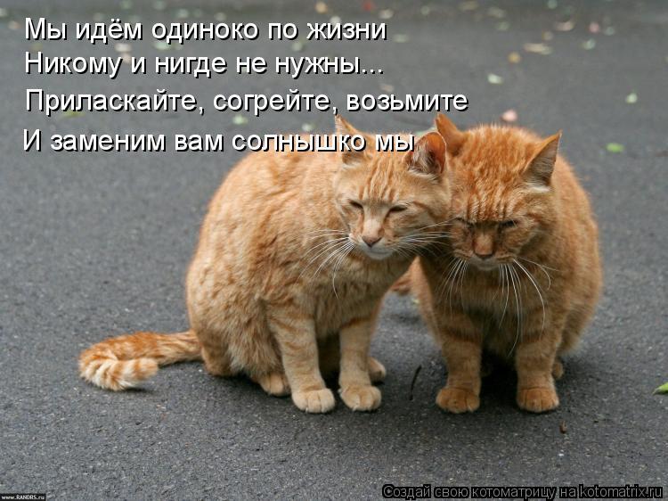 Котоматрица: Мы идём одиноко по жизни Никому и нигде не нужны... Приласкайте, согрейте, возьмите И заменим вам солнышко мы