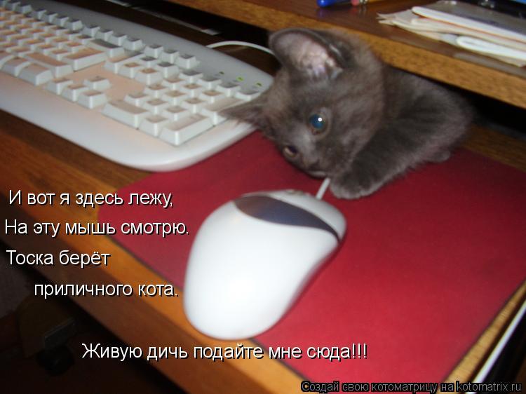 Котоматрица: И вот я здесь лежу, На эту мышь смотрю. Тоска берёт  приличного кота. Живую дичь подайте мне сюда!!!