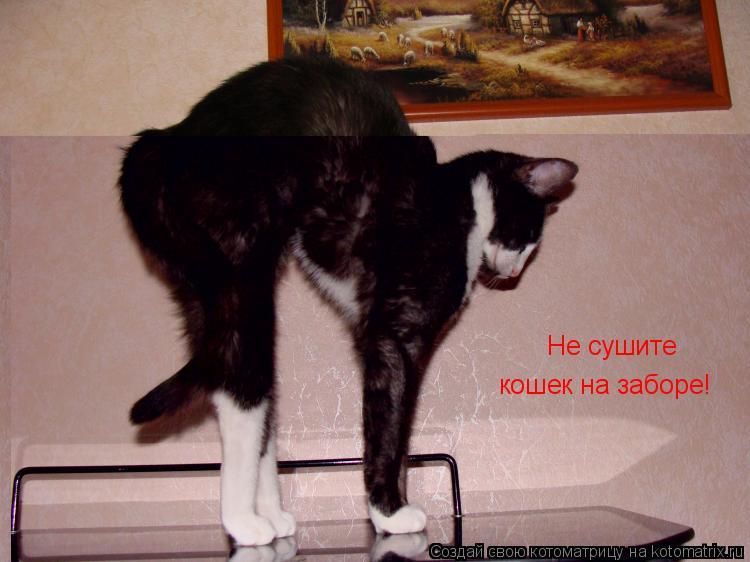 Котоматрица: Не сушите  кошек на заборе!