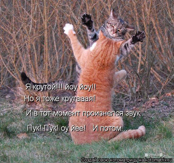Котоматрица: Я крутой!!! йоу йоу!! Но я тоже крутааая! И в тот момент произнелся звук... Пук! Пук! оу йее! И потом...