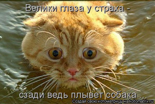 Котоматрица: Велики глаза у страха - сзади ведь плывет собака ...