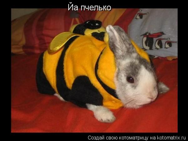 Котоматрица: Йа пчелько