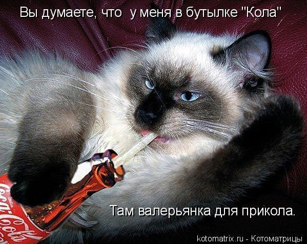 "Котоматрица: Вы думаете, что  у меня в бутылке ""Кола""  Там валерьянка для прикола."
