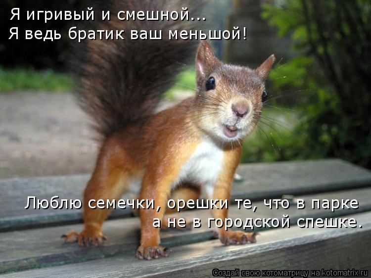 Котоматрица: Я игривый и смешной... Я ведь братик ваш меньшой! Люблю семечки, орешки те, что в парке а не в городской спешке.