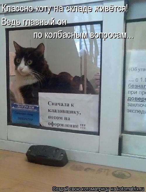 Котоматрица: Классно коту на складе живётся! Ведь главный он  по колбасным вопросам...