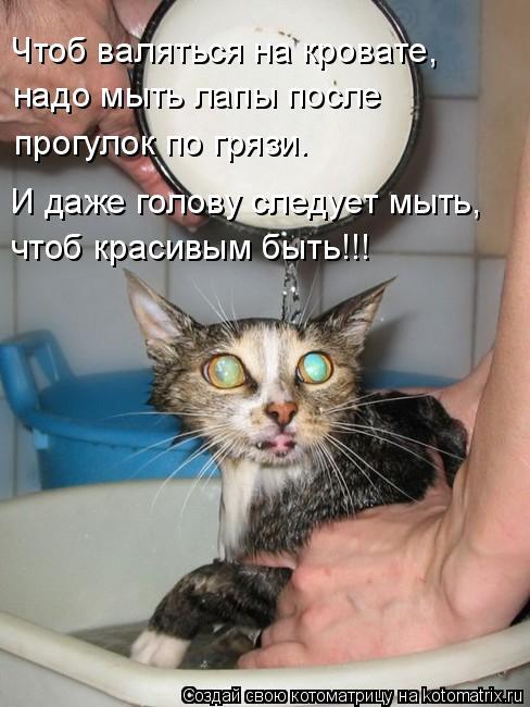 Котоматрица: Чтоб валяться на кровате, надо мыть лапы после прогулок по грязи. И даже голову следует мыть, чтоб красивым быть!!!