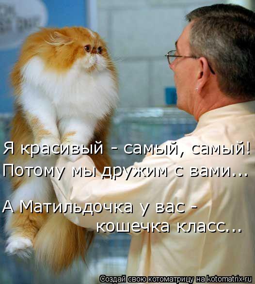 Котоматрица: Я красивый - самый, самый! Потому мы дружим с вами... А Матильдочка у вас - кошечка класс...