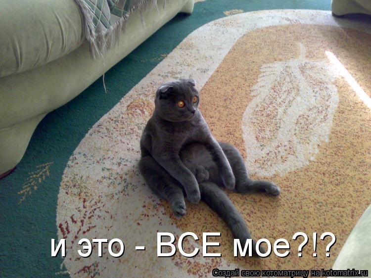 Котоматрица: и это - BCE моe?!?