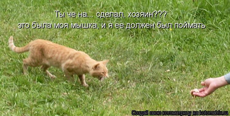 Котоматрица: Ты че на... сделал, хозяин???  это была моя мышка, и я ее должен был поймать