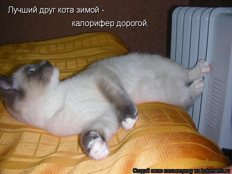 Котоматрица: Лучший друг кота зимой - калорифер дорогой.