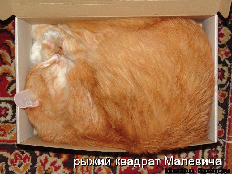 Котоматрица: рыжий квадрат Малевича