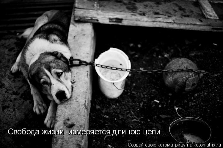 Котоматрица: Свобода жизни  измеряется длиною цепи....