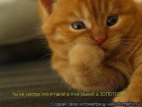 Котоматрица: ты не смотри,что я такой,а я не рыжий,а ЗОЛОТОЙ!!!
