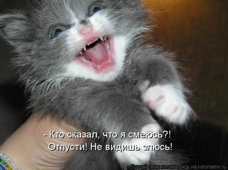 Котоматрица: - Кто сказал, что я смеюсь?! Отпусти! Не видишь злюсь!