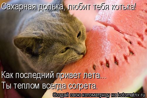 Котоматрица: Сахарная долька, любит тебя котька! Как последний привет лета... Ты теплом всегда согрета.
