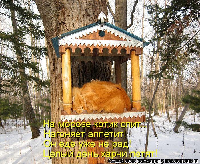 Котоматрица: На морозе котик спит... Нагоняет аппетит! Он еде уже не рад! Целый день харчи летят!