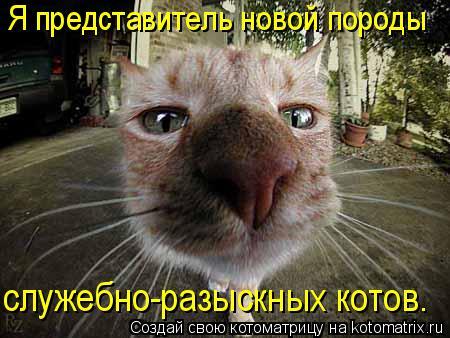 Котоматрица: Я представитель новой породы служебно-разыскных котов.