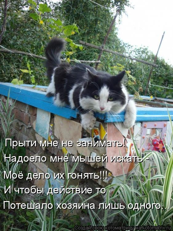 Котоматрица: Прыти мне не занимать! Надоело мне мышей искать - Моё дело их гонять!!! И чтобы действие то  Потешало хозяина лишь одного...