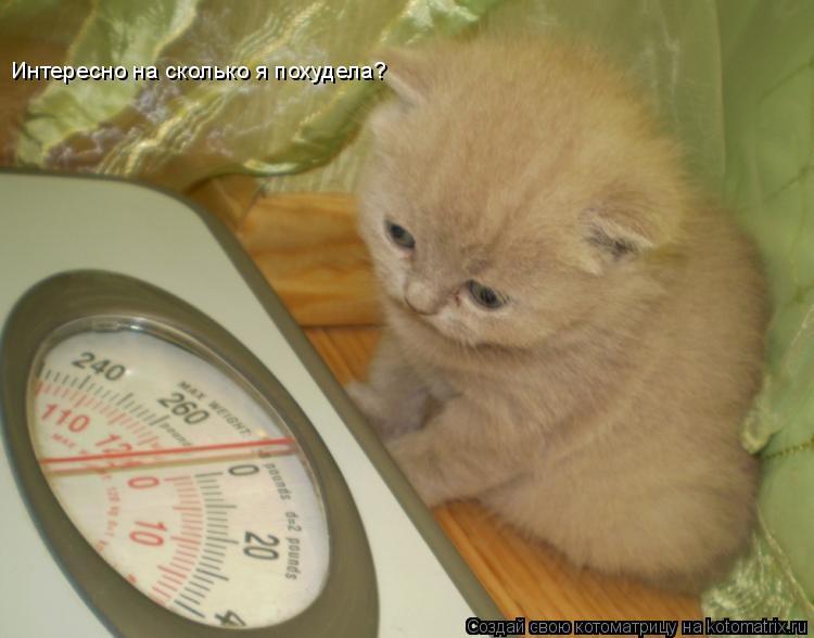 Котоматрица: Интересно на сколько я похудела?