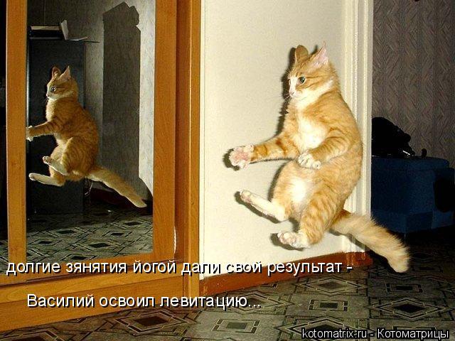 Котоматрица: долгие зянятия йогой дали свой результат - Василий освоил левитацию...