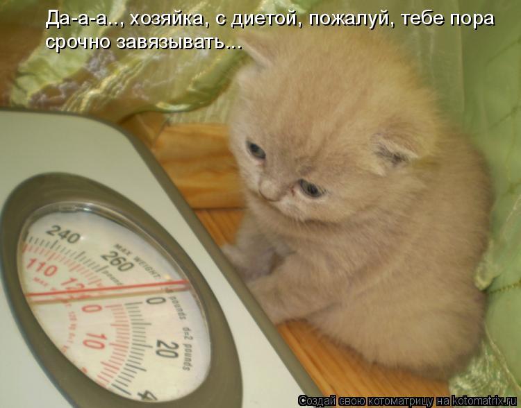 Котоматрица: Да-а-а.., хозяйка, с диетой, пожалуй, тебе пора срочно завязывать...