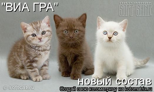 """Котоматрица: """"ВИА ГРА"""" новый состав"""
