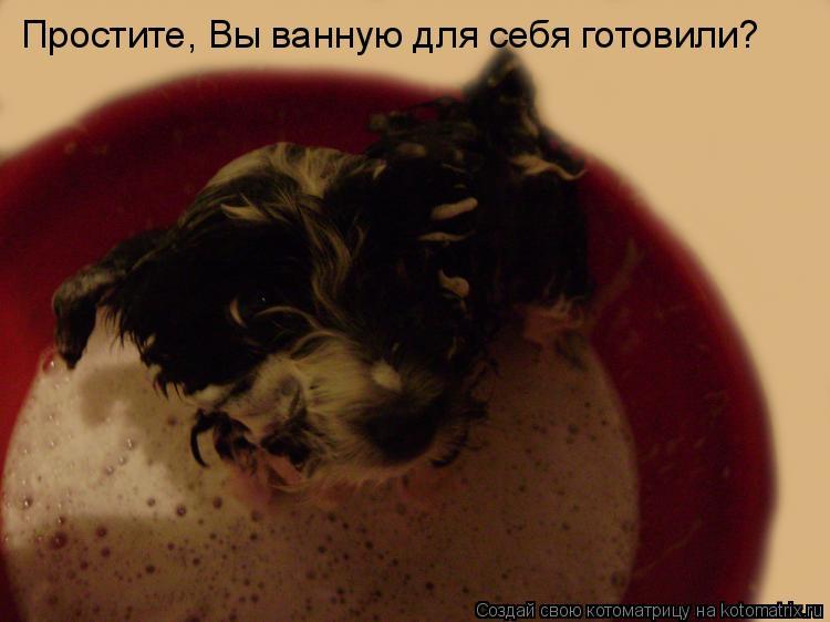 Котоматрица: Простите, Вы ванную для себя готовили?